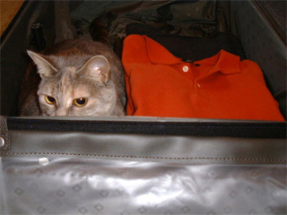 Dolly in my luggage