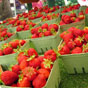 Thumbnail: Sandbanks '04 Strawberries