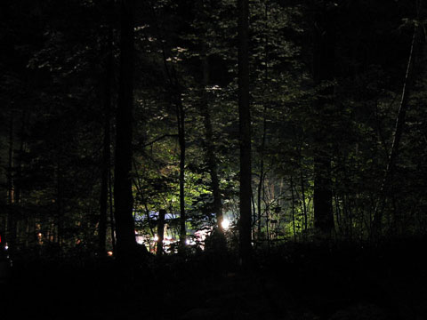 Bon Echo '04 Night woods
