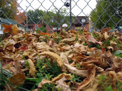 Thumbnail: Autumn leaves