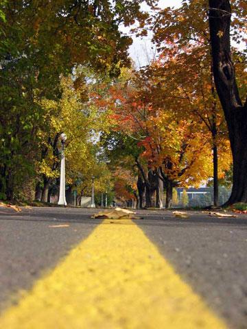 Thumbnail: Autumn pathway
