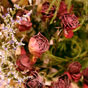 Thumbnail: More dried flowers