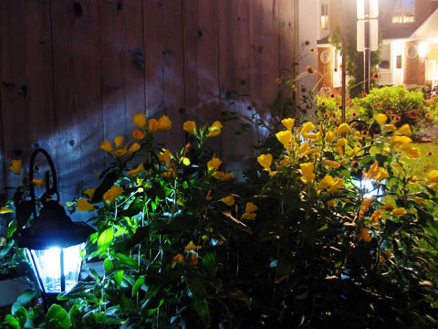 Thumbnail: Garden at night