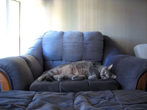 Thumbnail: Dolly on couch