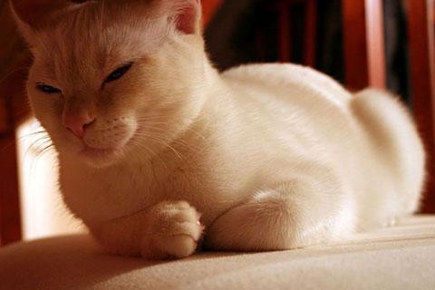 Thumbnail: Lacey naps
