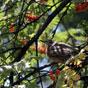 Thumbnail: Garden birds
