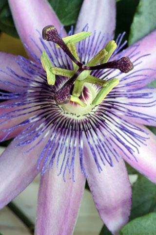 Thumbnail: Purple flower