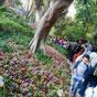 Thumbnail: Garden path