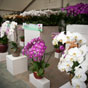 Thumbnail: Orchid display