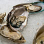 Thumbnail: Oysters in the half shell