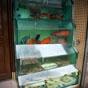 Thumbnail: Fresh seafood