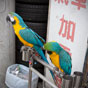 Thumbnail: Parrots