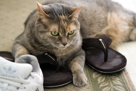 Dolly on shoes