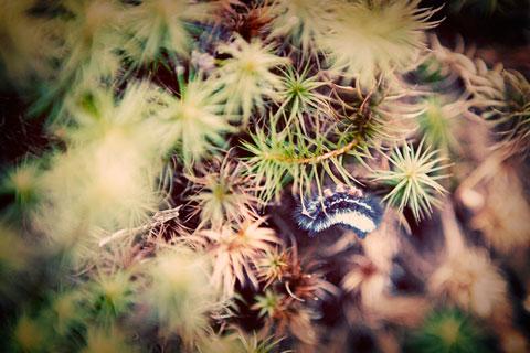 Thumbnail: Caterpillar