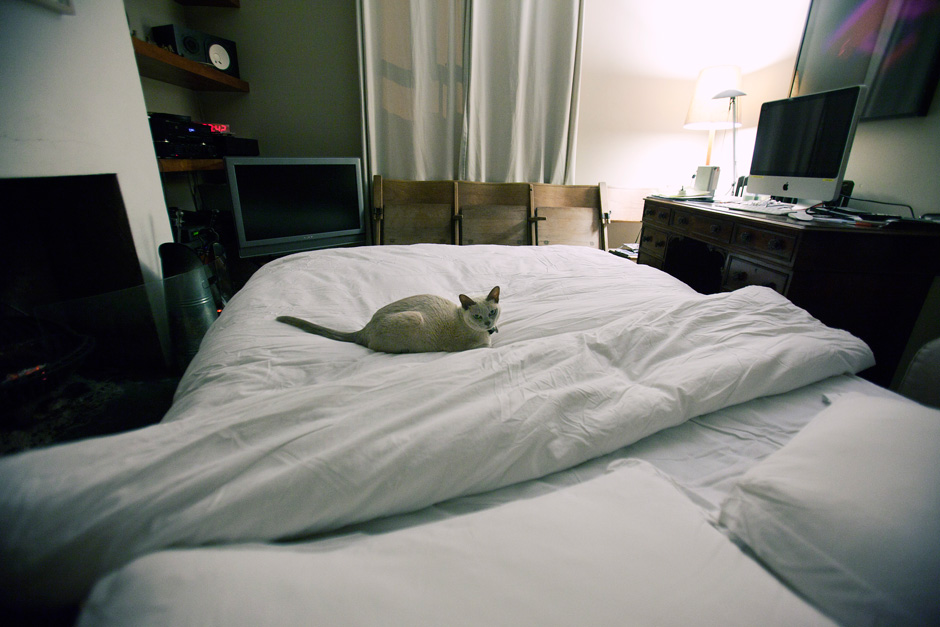 kitty on bed