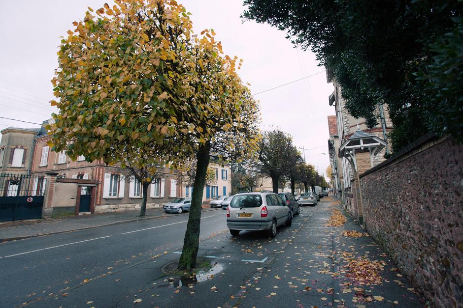 square trees
