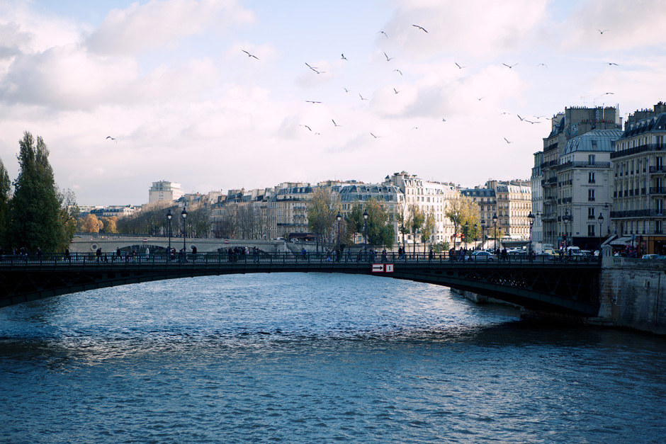 birds over the Seine River