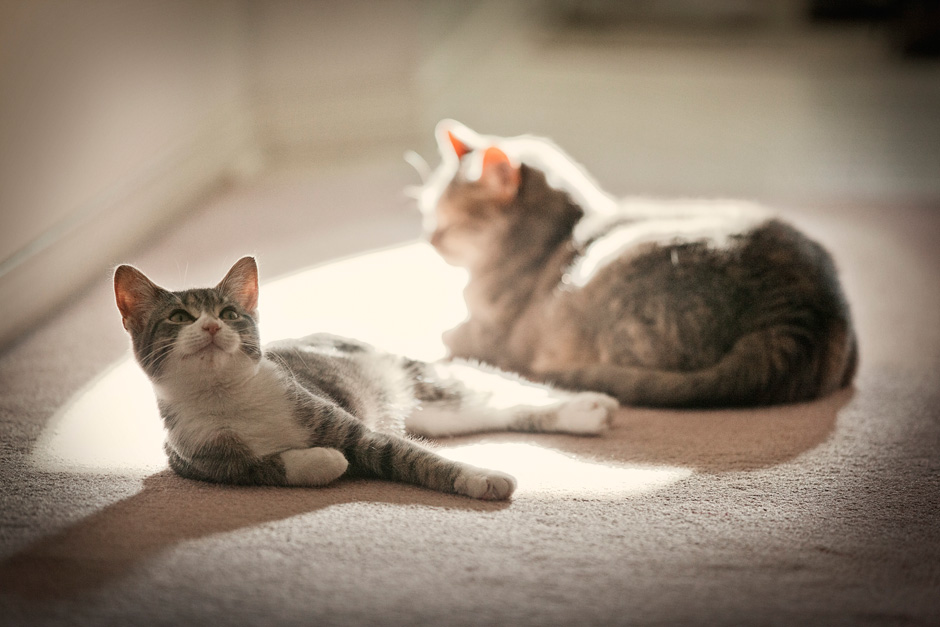 cats in sunbeam