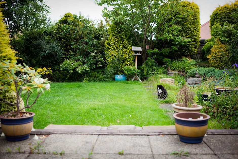 Barney in the garden
