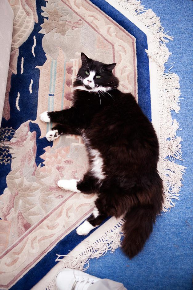 Barney the cat