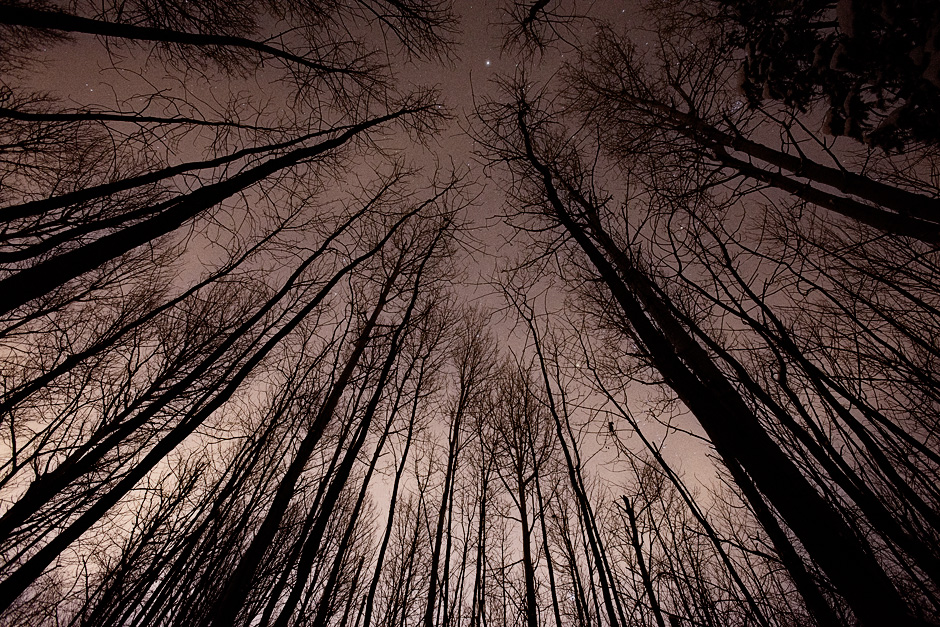 trees and night