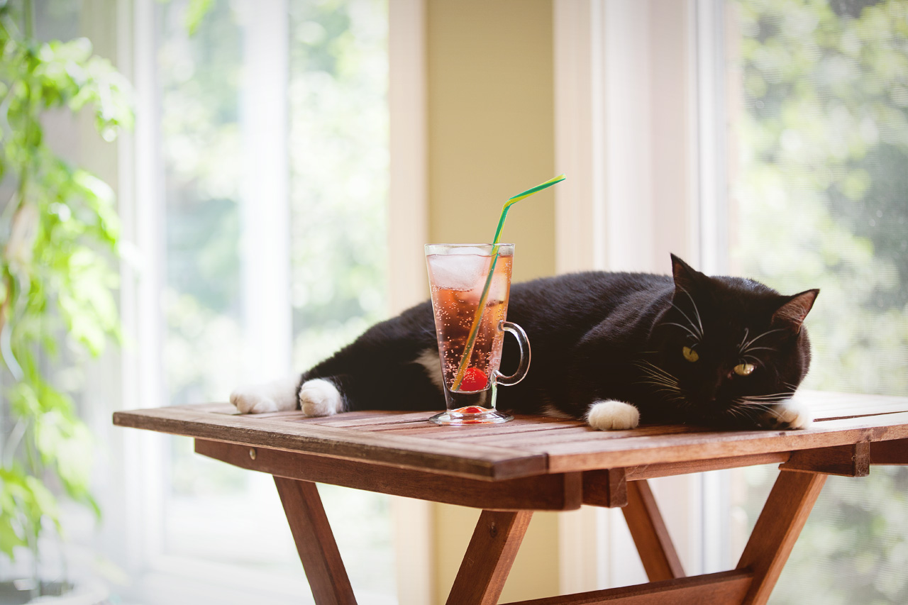 cat and drink on a hot day