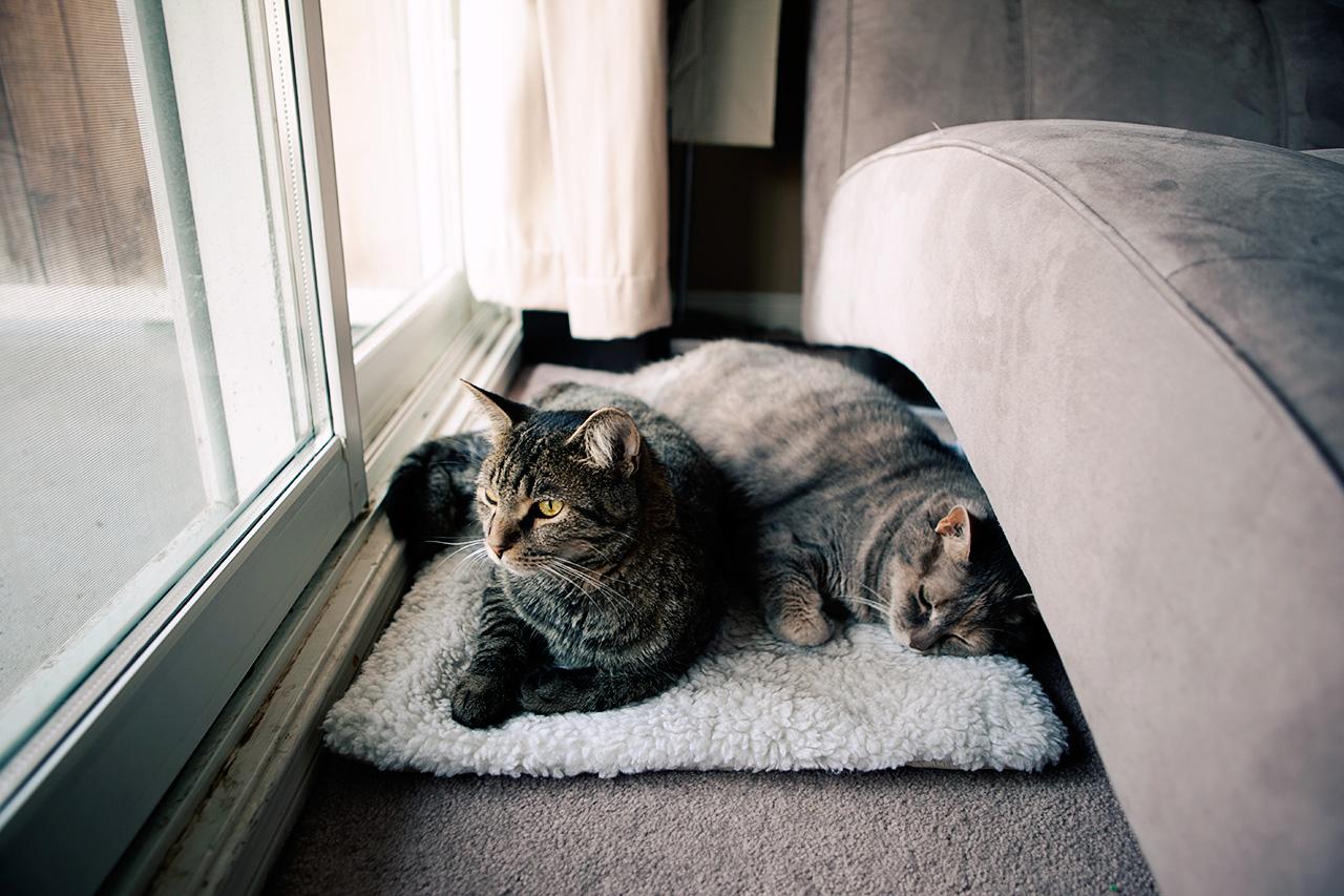 cats by the door
