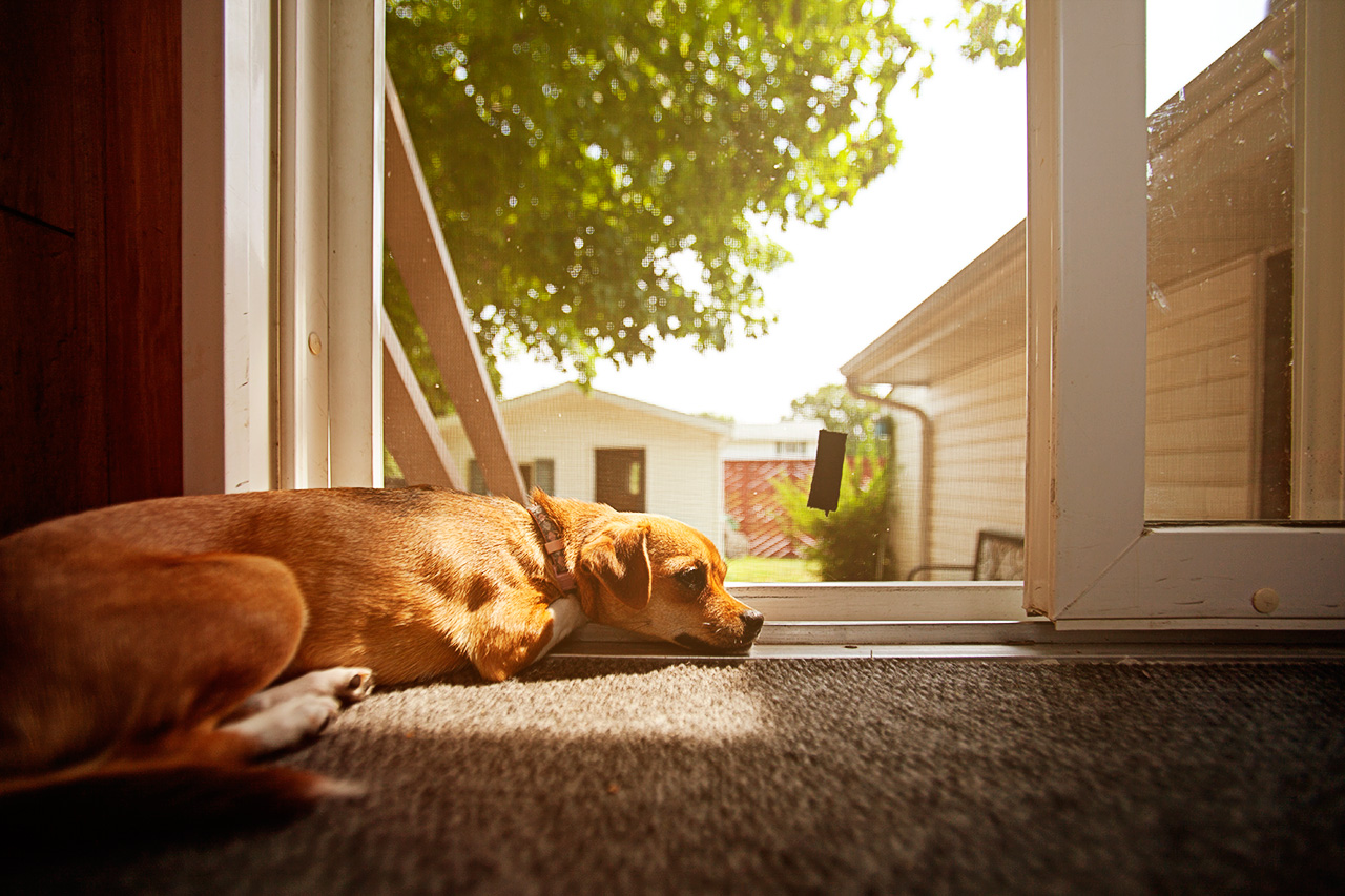 dog by the door