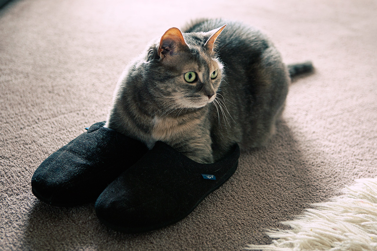 cat in slippers