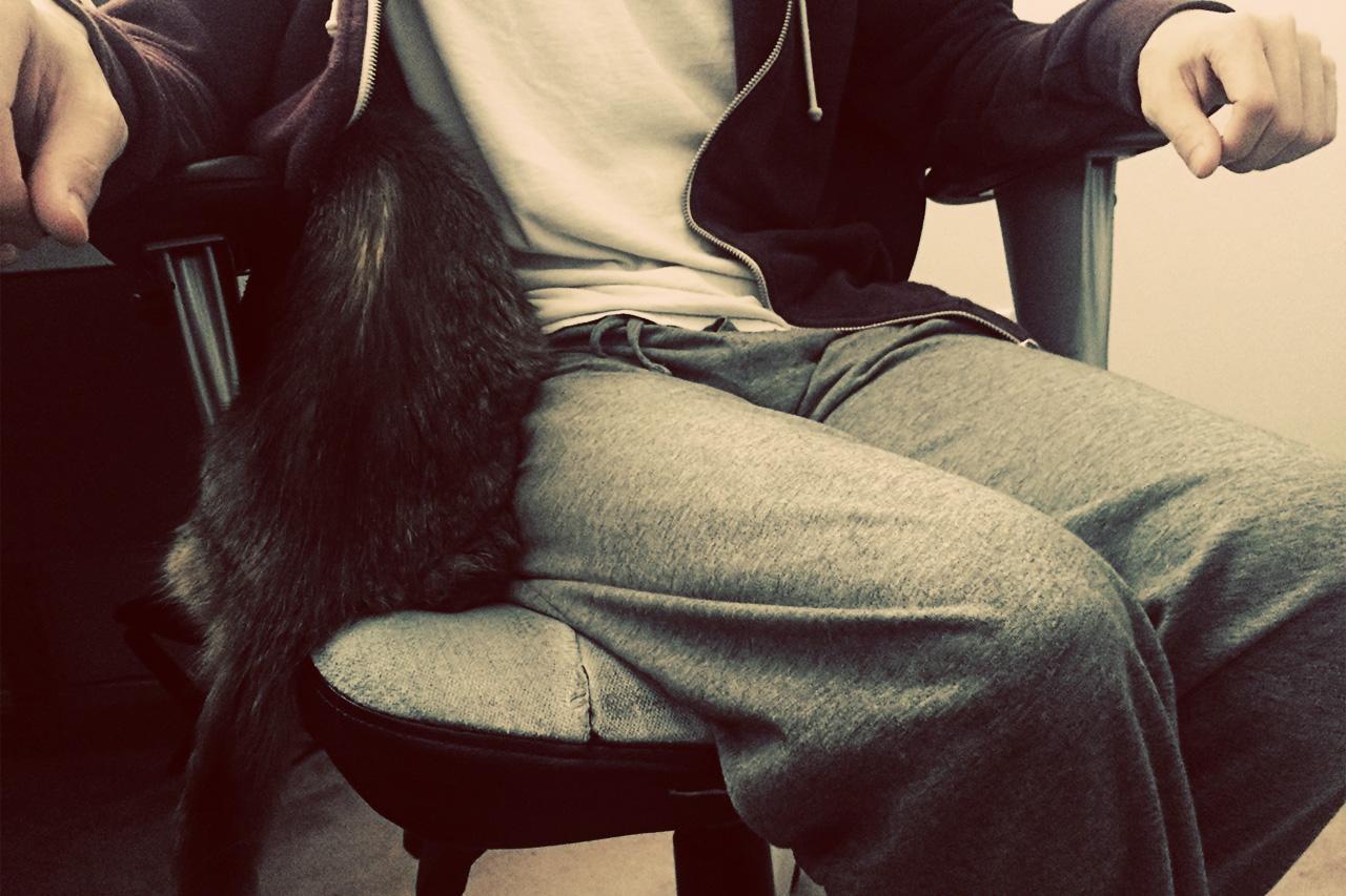 cat in my hoodie