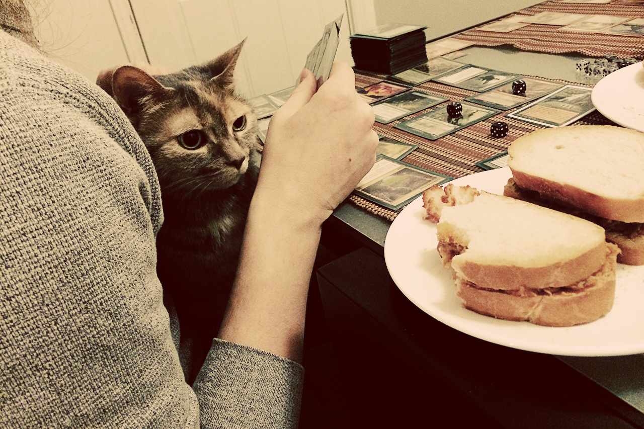 cat trying to steal sandwich